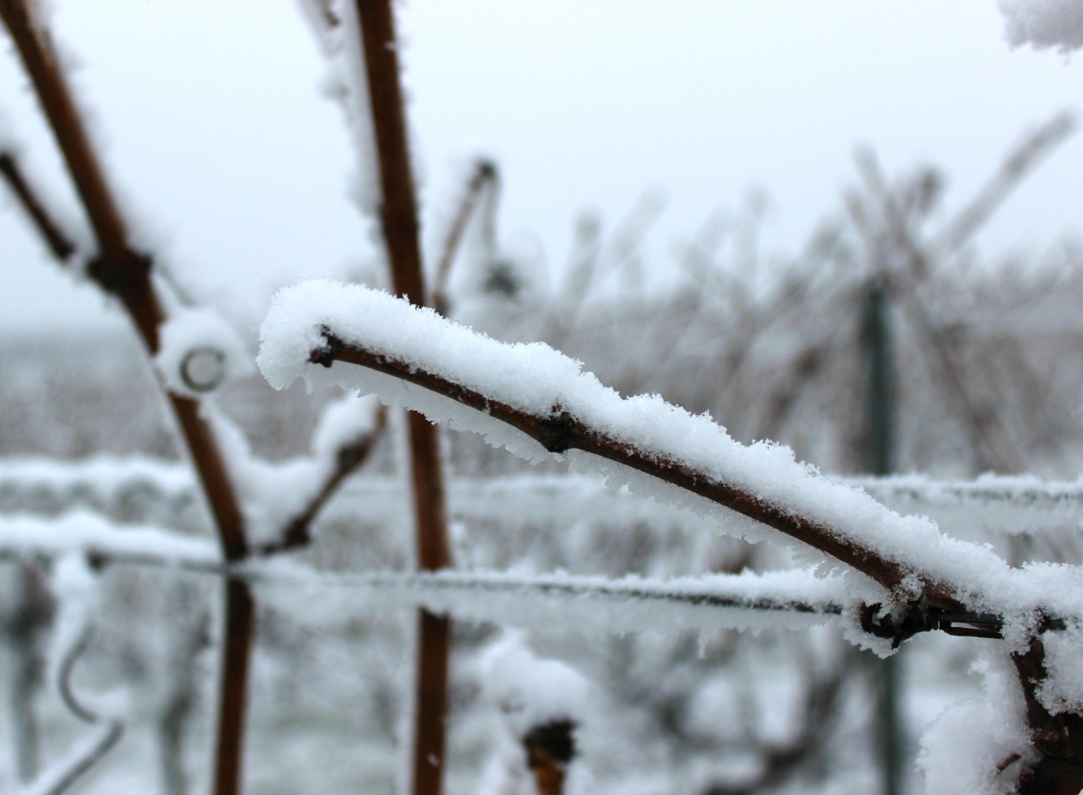 schnee-winter