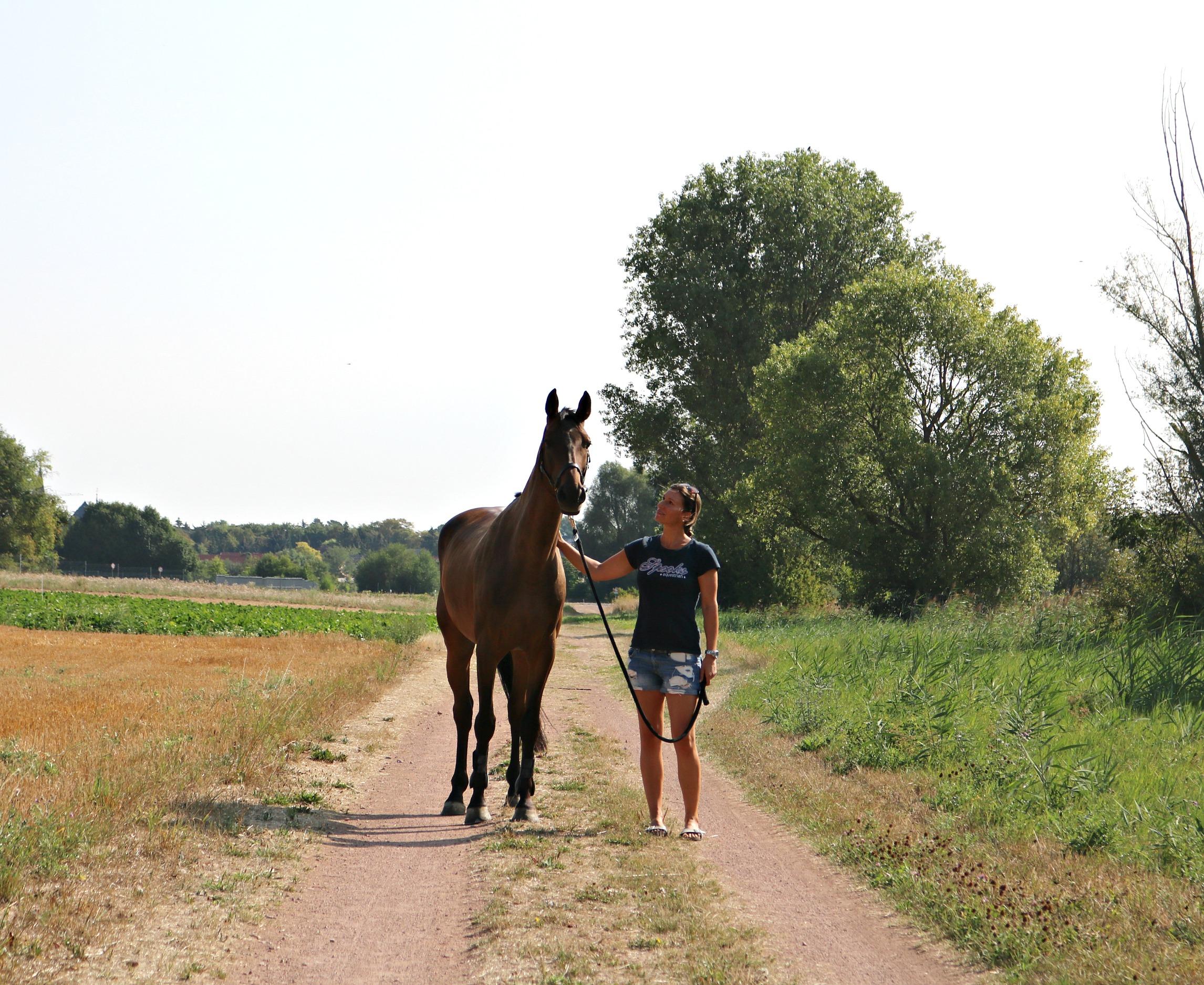 Sommerfavoriten_Pferd