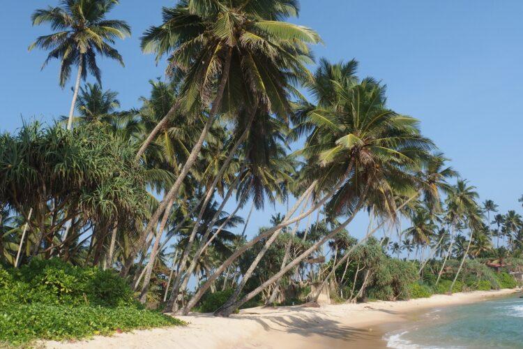Travel – Urlaub in Sri Lanka für die ganze Familie